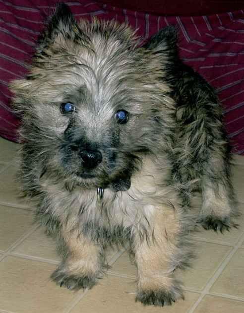 JayJay as a puppy